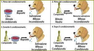 Condizionamento Classico: Definizione Esperimento di Pavlov